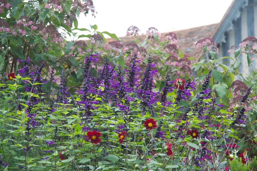pyschadelic salvia and mexican black