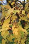 STARRY AUTUMN DAYS | Plants, Shrubs, English garden