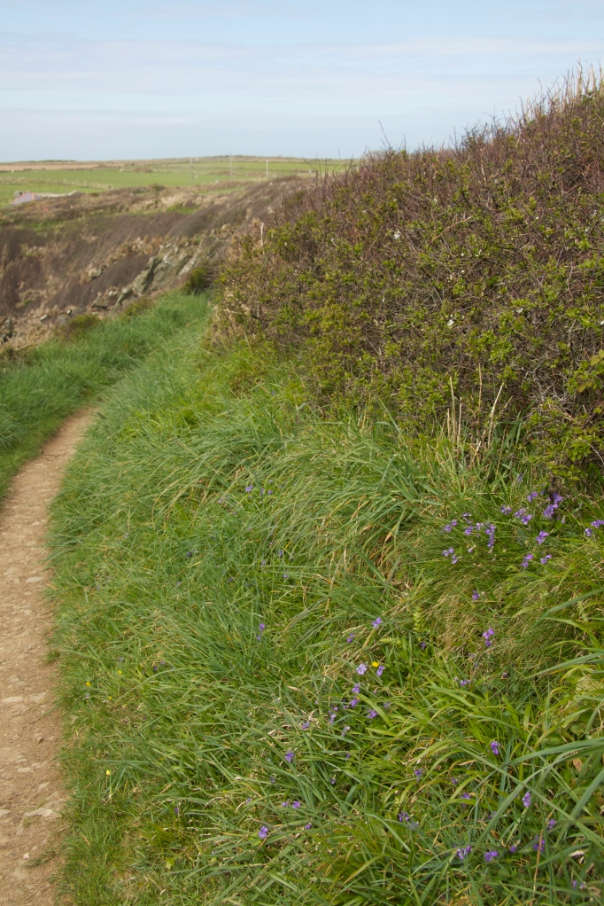 violet and path