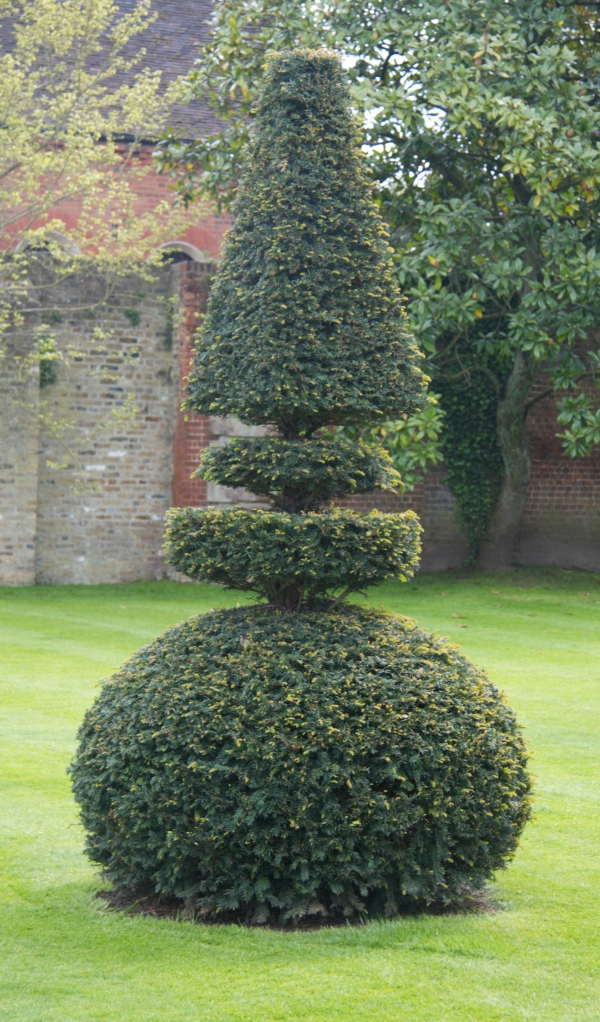 finished topiary