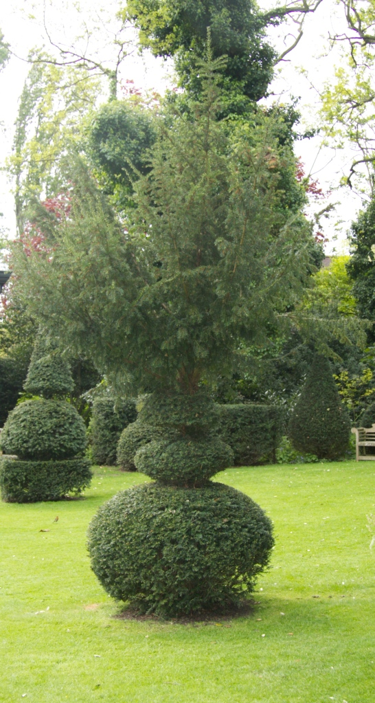 unfinished topiary