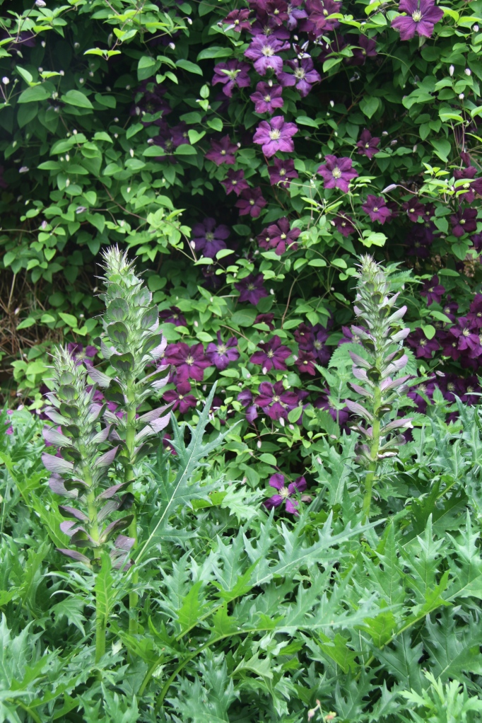 ACANTHUS AND CLEMATIS