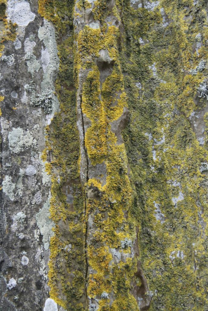 broganr lichen 2