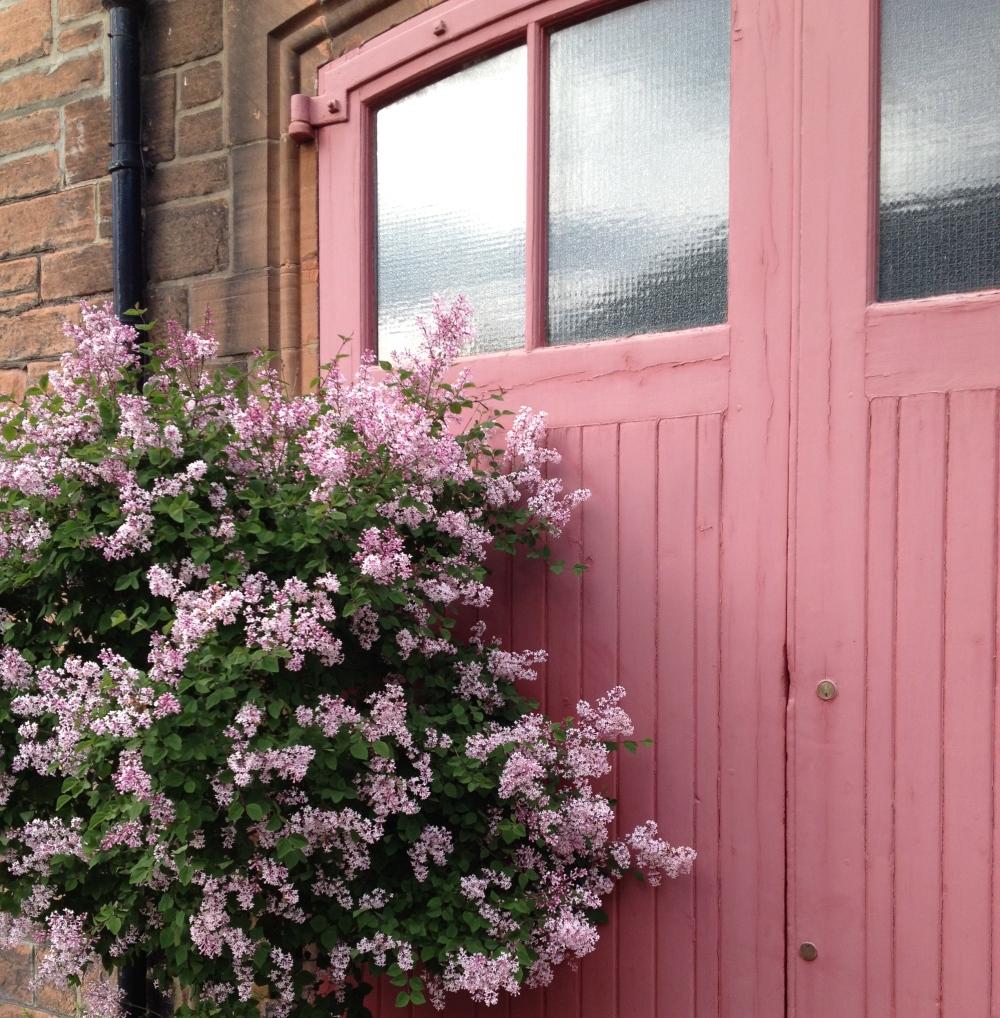 edinburgh lilac