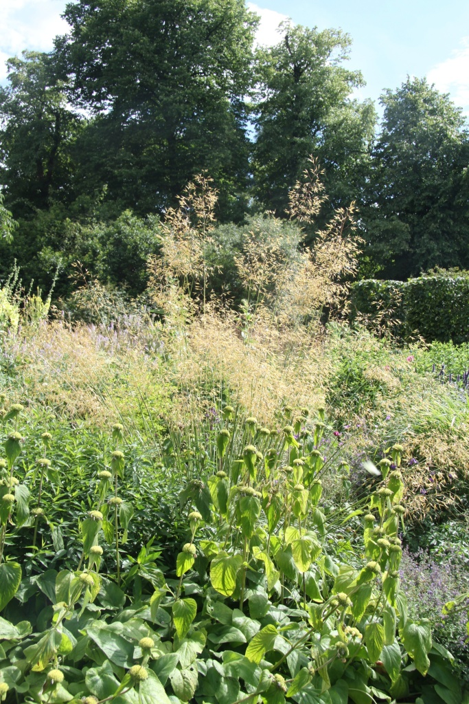 phlomis and stipa light