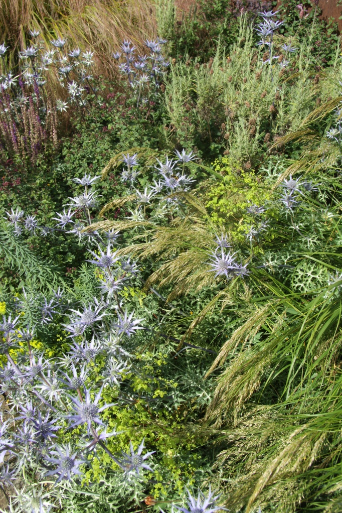 sea holly broom garden