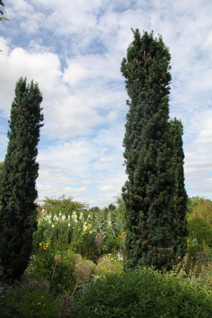 yew columns