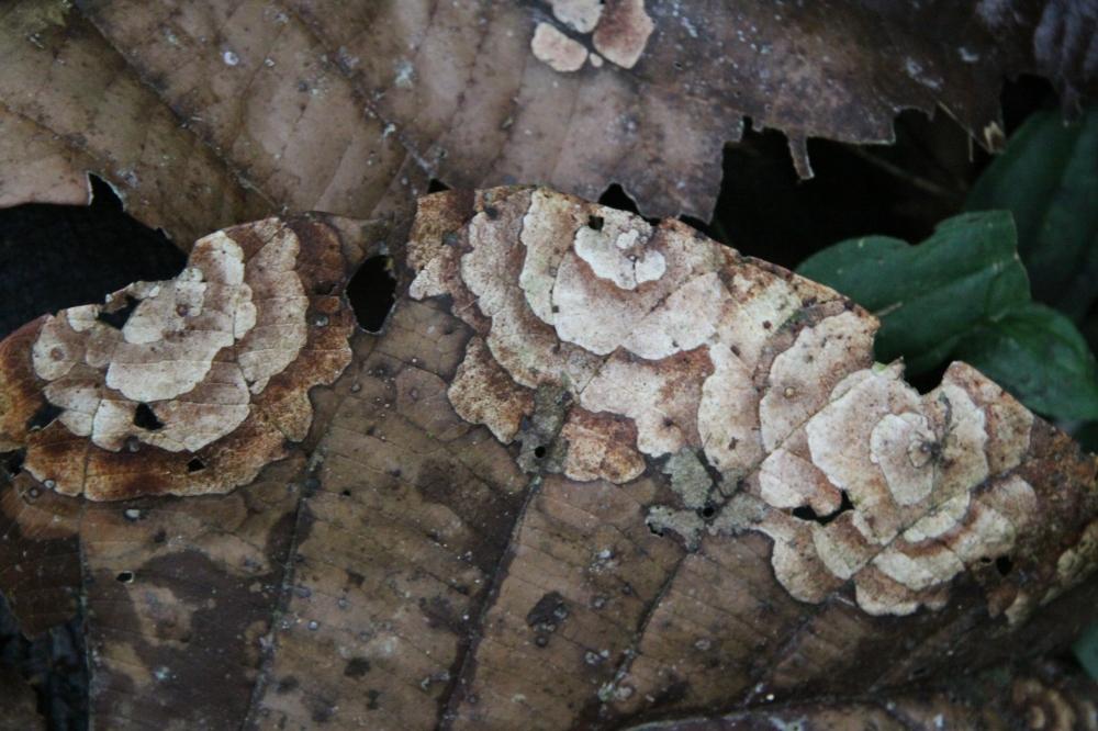 fungus leaf 2