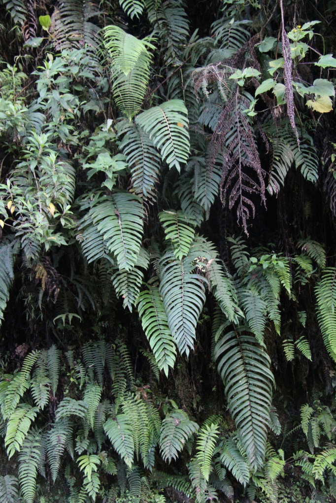 wall of fern