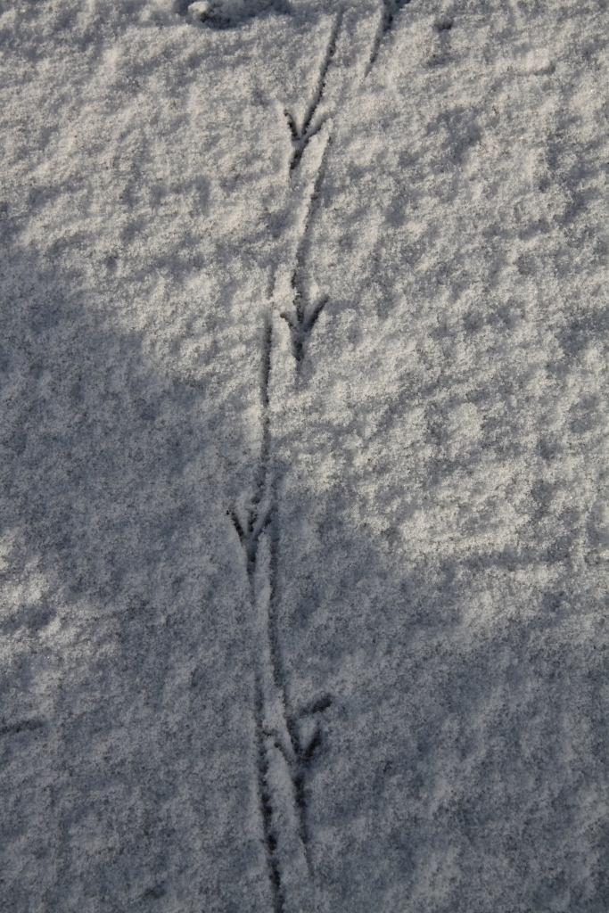 bird foot  prints