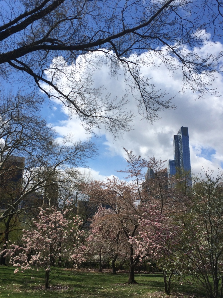 central magnolia