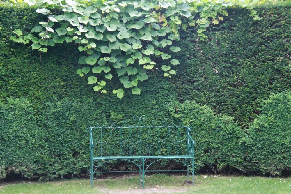 bench yew vitis coignetiea