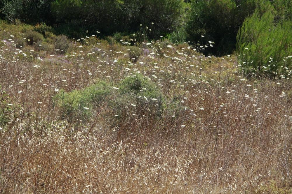 greek meadow