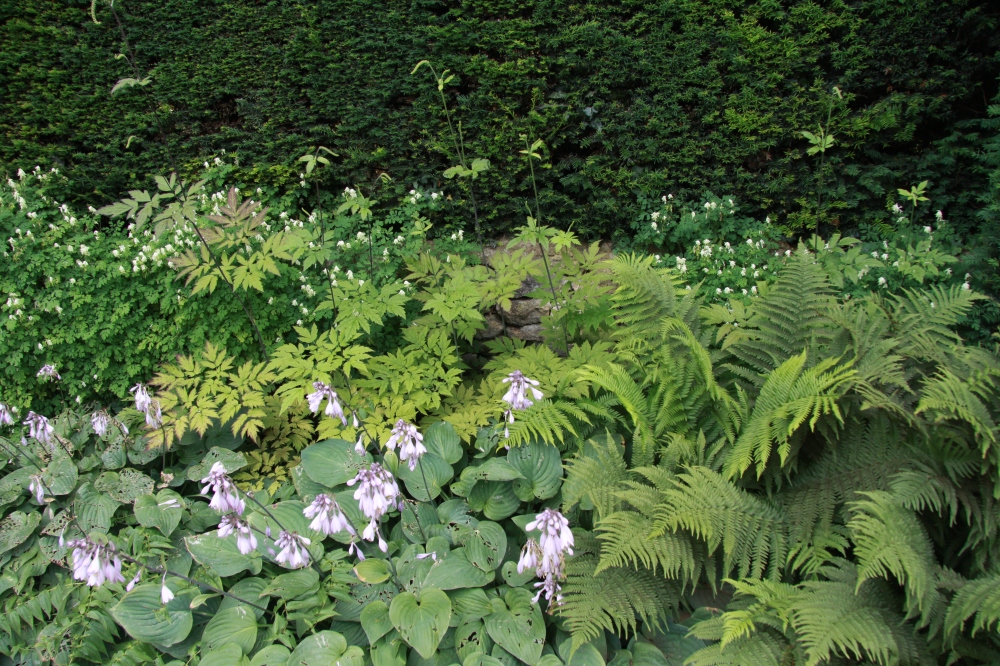 hosta and fern