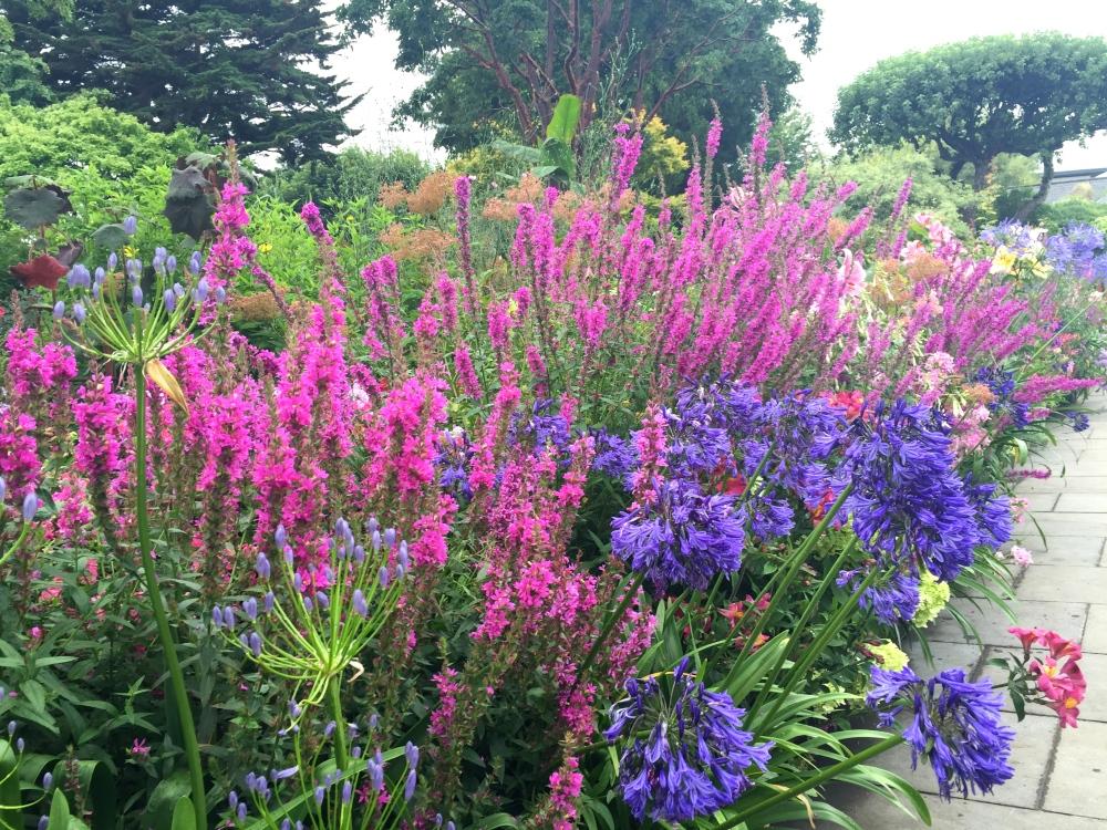 семенной способ выращивания плакун-травы и его применение в дизайне сада