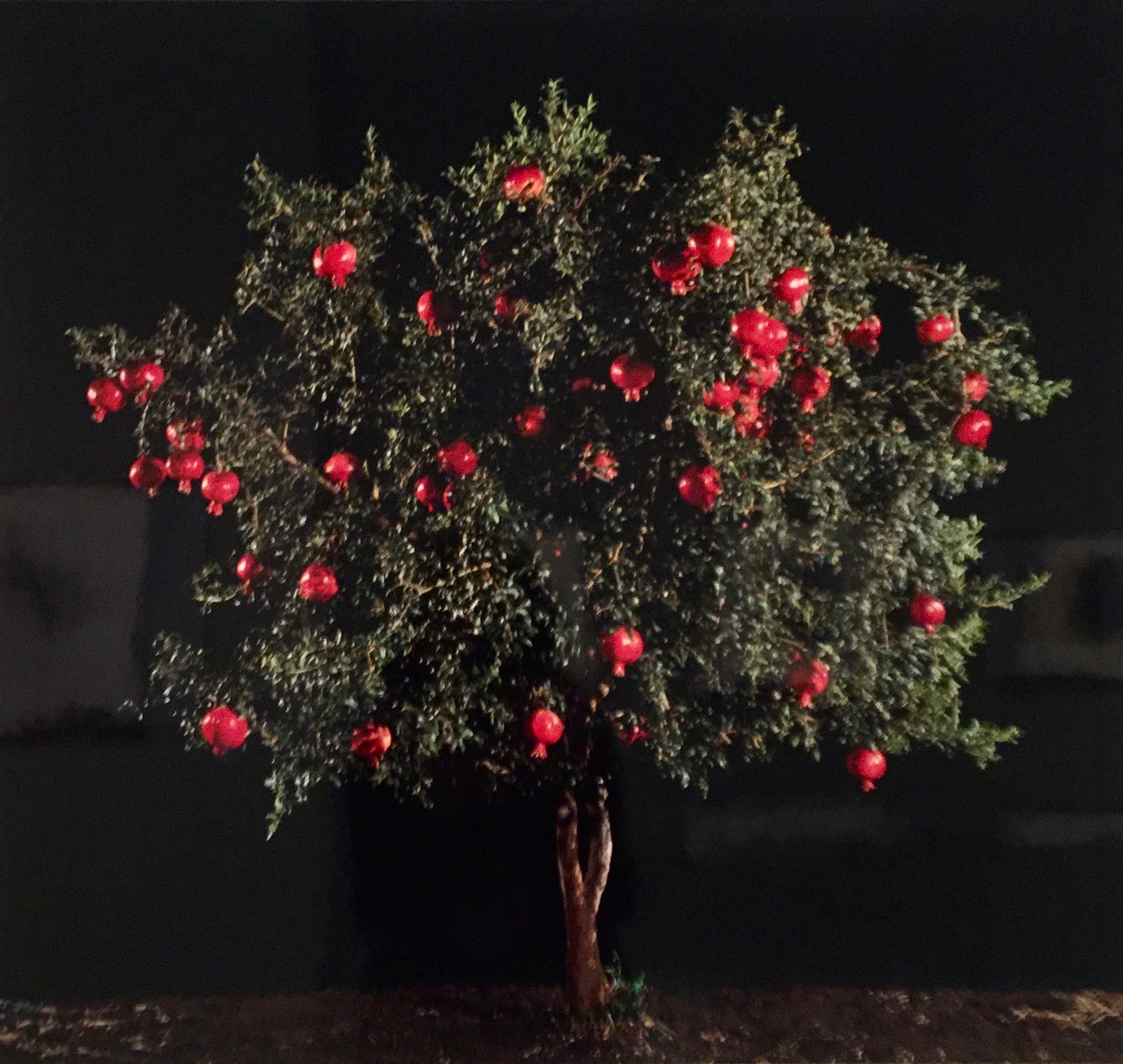 Pomegranate And Persimmon, Tal Shochat, 1974, Into The Woods, Vu0026A.